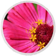 Fuchsia Pink Zinnia From The Whirlygig Mix Round Beach Towel