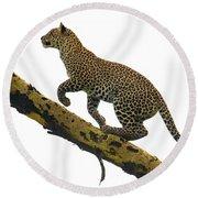 Leopard Panthera Pardus Climbing Round Beach Towel
