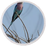 Lilac Breasted Roller On The Hunt Round Beach Towel