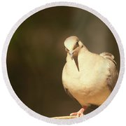 Mourning Dove Round Beach Towel