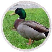 New Zealand - Male Mallard Duck Round Beach Towel