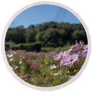 Sensation Cosmos Bipinnatus Fully Bloomed Colorful Cosmos On M Round Beach Towel