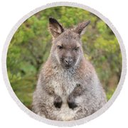 Wallaby Outside By Itself Round Beach Towel