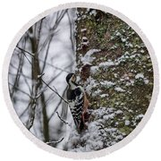 White-backed Woodpecker Round Beach Towel