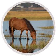 Wild Horse Of Assateague Island Photograph By Stephanie