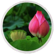 Blossoming Lotus Flower Closeup Round Beach Towel