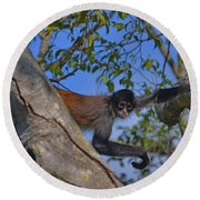 48- Capuchin Monkey Round Beach Towel