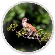 4979 - Brown Thrasher Round Beach Towel