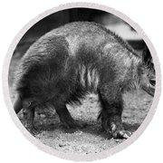 Aardvark Round Beach Towel