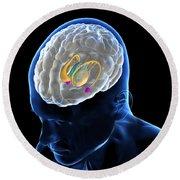 Anatomy Of The Brain Round Beach Towel