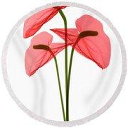 Anthurium Flowers, X-ray Round Beach Towel