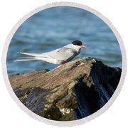 Arctic Tern Round Beach Towel