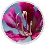 Bauhinia Purpurea - Hawaiian Orchid Tree Round Beach Towel by Sharon Mau