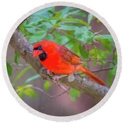 Cardinal Birds Hanging Out On A Tree Round Beach Towel