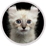 Cute American Curl Kitten With Twisted Ears Isolated Black Background Round Beach Towel