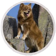 Finnish Lapphund Round Beach Towel
