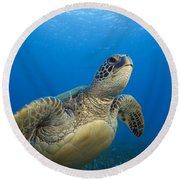 Hawaii, Green Sea Turtle Round Beach Towel