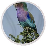 Lilac-breasted Roller Round Beach Towel