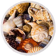 Mix Group Of Seashells Round Beach Towel