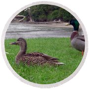 New Zealand - Mallard Ducks On The Grass Round Beach Towel