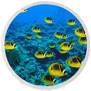 Raccoon Butterflyfish Round Beach Towel