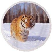 Siberian Tiger Round Beach Towel