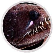 Threadfin Dragonfish Round Beach Towel