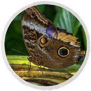 5113- Butterfly Round Beach Towel
