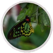 5156- Butterfly Round Beach Towel