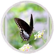 5276-001- Butterfly - Swallowtail Round Beach Towel