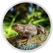Amphibian, Common British Toad / Frog Round Beach Towel