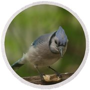 Bluejay Round Beach Towel