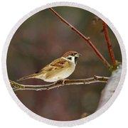 Eurasian Tree Sparrow Round Beach Towel