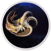 Hawaii, Day Octopus Round Beach Towel