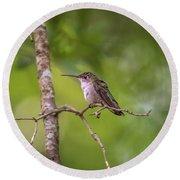 Hummingbird Found In Wild Nature On Sunny Day Round Beach Towel