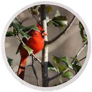 Img_0001 - Northern Cardinal Round Beach Towel