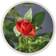 Red Rose Blooming Round Beach Towel