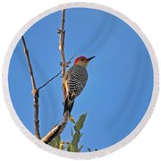 62- Red-bellied Woodpecker  Round Beach Towel