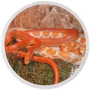 Corn Snake Round Beach Towel