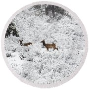 Elk In Deep Snow In The Pike National Forest Round Beach Towel