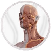 Facial Muscles Round Beach Towel