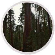 Giant Sequoia Trees Round Beach Towel