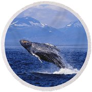 Humpback Whale Breaching Round Beach Towel