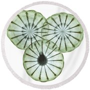 Opium Poppy Pods, X-ray Round Beach Towel