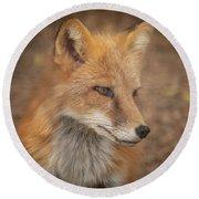 Russian Red Fox Round Beach Towel