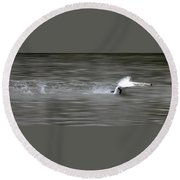 Swan Round Beach Towel