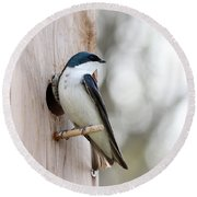 Tree Swallow Round Beach Towel