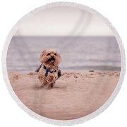York Dog Playing On The Beach. Round Beach Towel