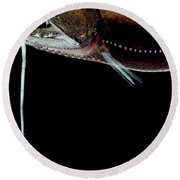 Deep Sea Dragonfish Round Beach Towel
