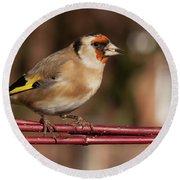 European Goldfinch Bird Close Up   Round Beach Towel